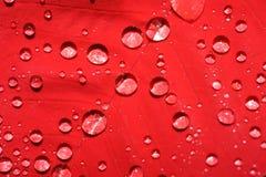 Rotes Blatt mit Wassertropfen Stockbild