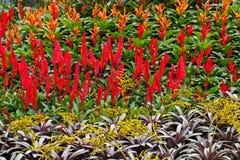 Rotes Blumenfeld Lizenzfreie Stockfotografie