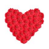Rotes Blumenherz gemacht von gerber Gänseblümchen Lizenzfreies Stockbild