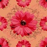 Rotes Blumenmuster, nahtlos Gänseblümchen auf einem orange Hintergrund vektor abbildung