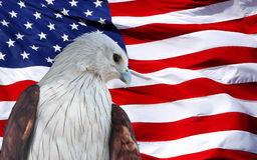 ROTES Eagle eingestellt gegen amerikanische Flagge. Stockbild