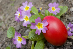 Rotes Ei und Blumen Lizenzfreie Stockfotos