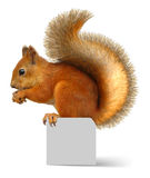 Rotes Eichhörnchen stockfoto