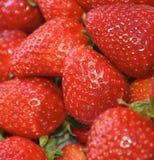 Rotes Erdbeerfeld Stockbild