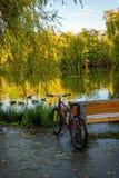 Rotes Fahrrad steht die Bank, nahe einem See mit sich hin- und herbewegenden Enten bereit Lizenzfreies Stockbild