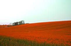 Rotes Feld Stockfoto