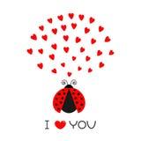 Rotes Fliegendamen-Wanzeninsekt mit Herzen Nette Zeichentrickfilm-Figur Glücklicher Valentinsgrußtag Ich liebe dich Text glücklic Lizenzfreie Stockfotografie