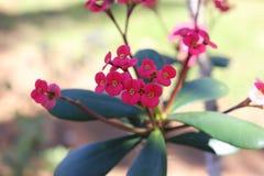 Rotes Garten-Blumentageslicht Asien stockbilder