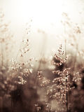 Rotes Geburts- Gras (flacher abstrakter Hintergrund dof, warme Farben, P Stockfotografie