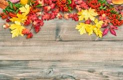 Rotes Gelb lässt Beeren Herbsthintergrund Abbildung der roten Lilie Lizenzfreies Stockfoto