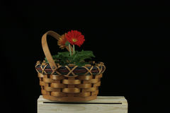 Rotes Gerberagänseblümchen im Torkorb Stockfotos