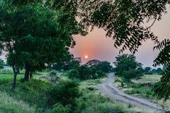 Rotes grünes ländliches Bauernhofdorf Indien des Sonnenuntergangs stockbilder