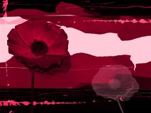 Rotes grungy Feld Stockbild