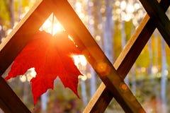 Rotes Herbstahornblatt auf dem hölzernen Gitter der Sommerterrasse eines Landhauses in den Strahlen der untergehenden Sonne stockbilder