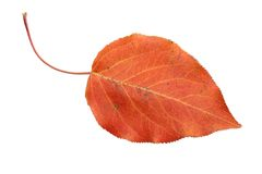 Rotes Herbstblatt stockfoto
