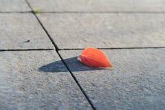 Rotes Herbstblatt Stockbild