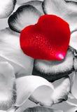Rotes Herz. Stockfotografie