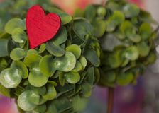 Rotes Herz auf dem grünen Baum lizenzfreies stockfoto