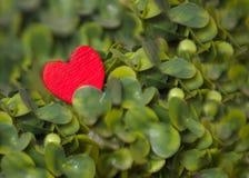 Rotes Herz auf dem grünen Baum lizenzfreie stockfotografie