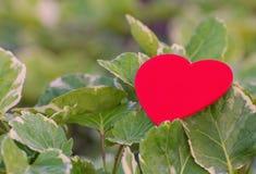 Rotes Herz auf grünem Blatt mit Naturhintergrund Lizenzfreie Stockbilder