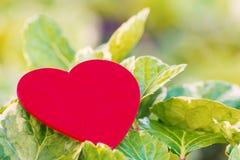 Rotes Herz auf grünem Blatt mit Naturhintergrund Stockfotografie