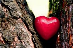 Rotes Herz in einem Baumstamm. Romantische Liebe Stockfotografie