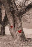 Rotes Herz gemalt auf alten Bäumen stockfotos