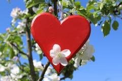 Rotes Herz im blühenden Apfelbaum stockfoto