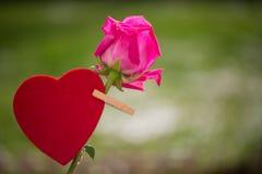 Rotes Herz mit einem rosa stieg, befestigt mit einer Wäscheklammer Lizenzfreie Stockfotos