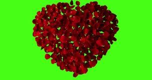 Rotes Herz von den rosafarbenen Blumenblättern, die mit Turbulenz auf Farbenreinheitsschlüssel, grüner Schirmhintergrund fliegen