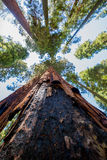 Rotes Holz hoch im Himmel lizenzfreies stockfoto