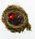 Rotes Inneres im Nest Stockbild