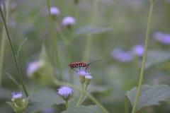 Rotes Insekt auf wilder Blume lizenzfreie stockbilder