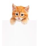Rotes Kätzchen Stockbild