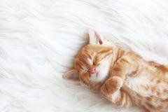 Rotes Kätzchen stockfoto
