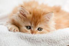 Rotes Kätzchen angeschmiegt gegen ein weißes Tuch lizenzfreies stockbild