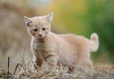 Rotes Kätzchen auf einem Stroh Lizenzfreie Stockfotos