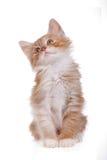 Rotes Kätzchen, das oben schaut Stockfotografie