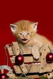 Rotes Kätzchen miauendes Weihnachten Lizenzfreie Stockbilder