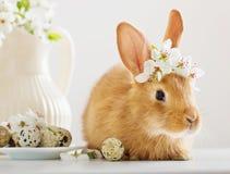 Rotes Kaninchen mit Ostereiern Stockfoto