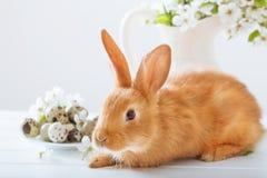 Rotes Kaninchen mit Ostereiern Stockbilder