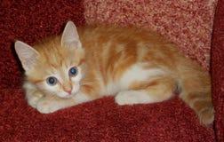 Rotes kleines Kätzchen Lizenzfreie Stockfotos