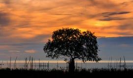 Rotes Licht der Sonnenaufgangdämmerung Stockbild