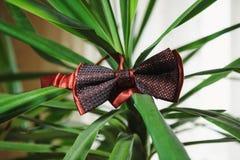 Rotes men& x27; s-Hochzeitsschmetterlingsbindung Stockfoto