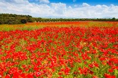 Rotes Mohnblumenblumenfeld in Frankreich Stockfotografie