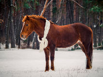 Rotes Pferd Lizenzfreie Stockfotografie