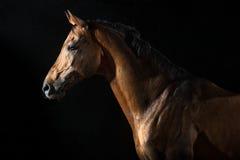 Rotes Pferd in der Nacht unter dem Regen Stockbild