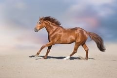 Rotes Pferd in der Wüste lizenzfreie stockfotos