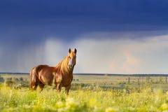 Rotes Pferd gegen Regen Stockfotografie