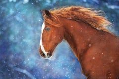 Rotes Pferd im Schnee lizenzfreie stockfotografie